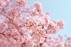 【英語で文化】日本の「国民の休日」を英語で説明しよう☆National Holidays