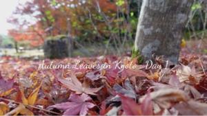 【京都の紅葉】東福寺・永観堂・南禅寺・北野天満宮のライトアップを見る